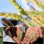 Agricultural Sector Development Support Programme :: Kenya Travelers