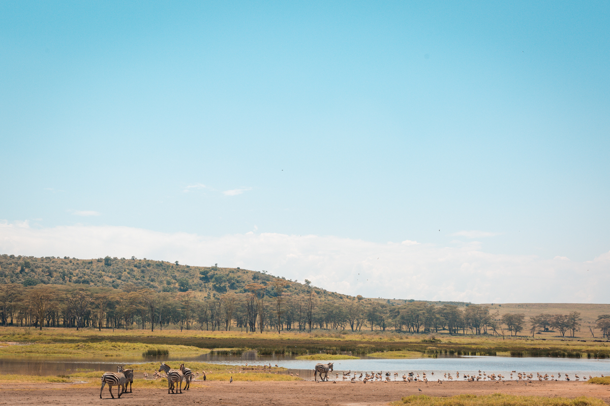 Lake Nakuru National Park_Sophie Moore