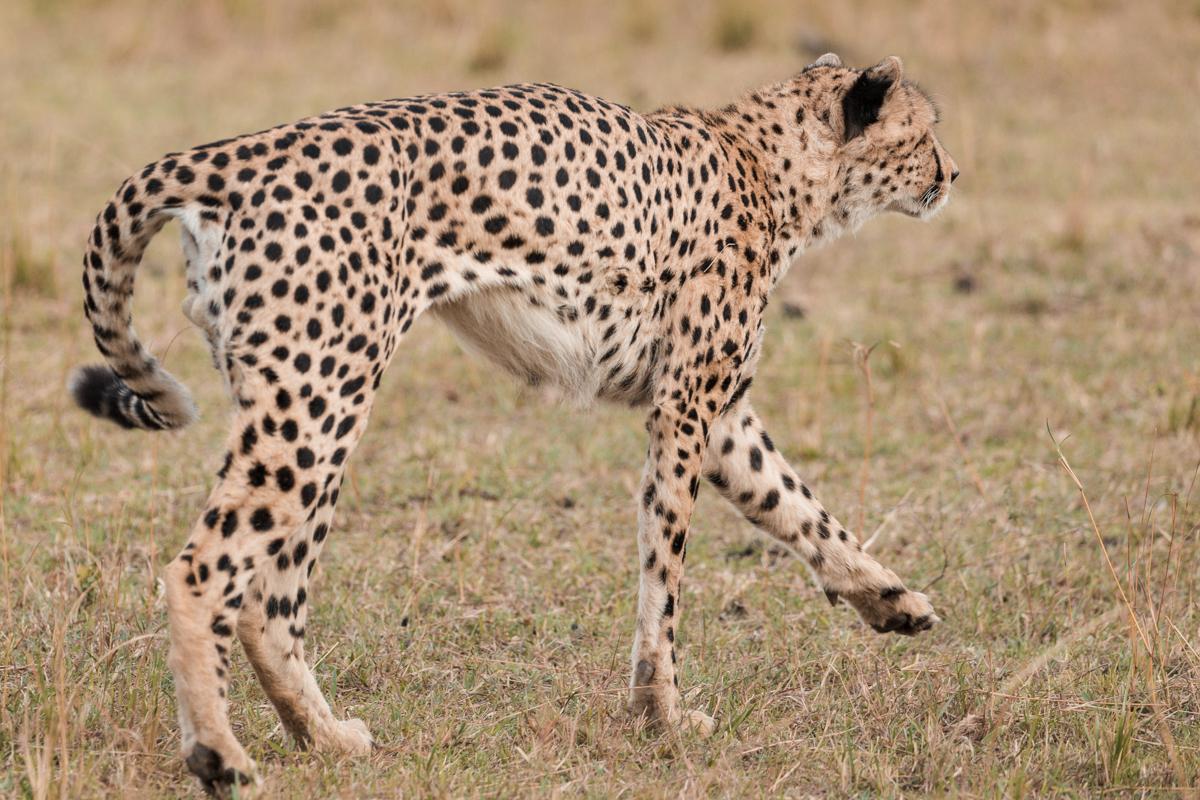 Maasai Mara National Reserve :: Kenya Wildlife Photography Safari