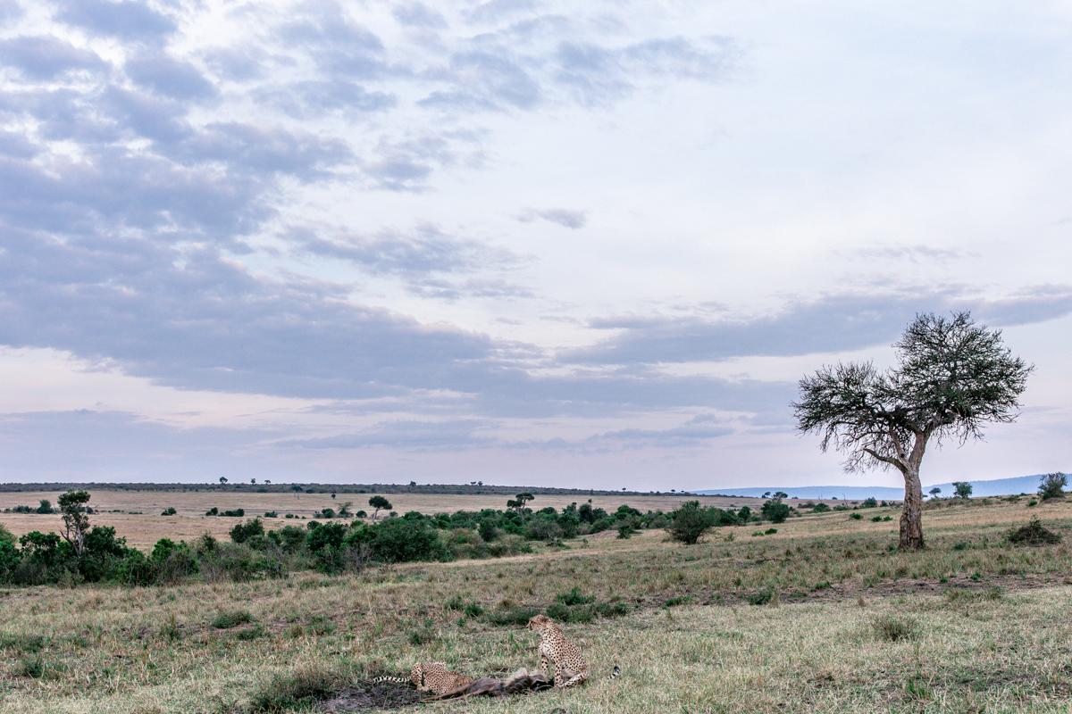 Iconic Magical The Greatest Maasai Mara National Reserve Kenya