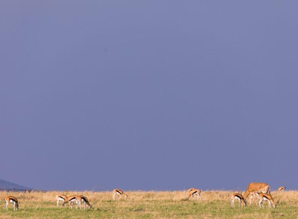 Wildlife Photography Maasai Mara :: Photographic Safari Magical Kenya