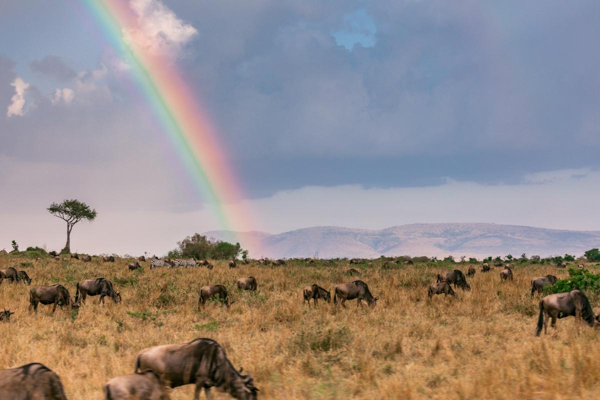 Mara Serena Safari Lodge :: Safari Adventure Wildlife Paradise