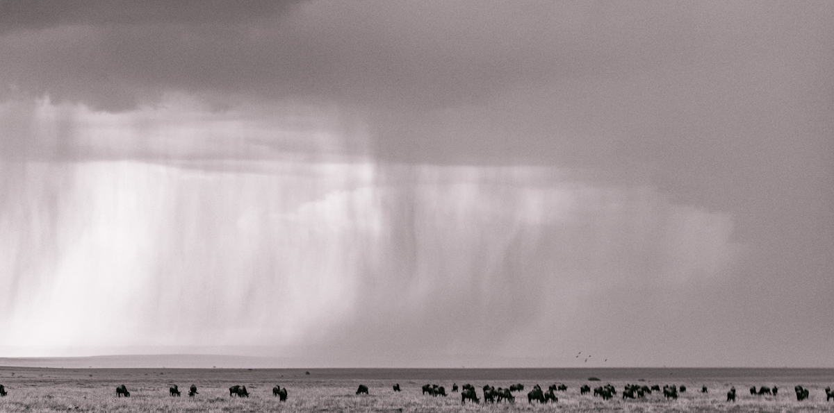 Travel Photography Inspiration African Wildlife