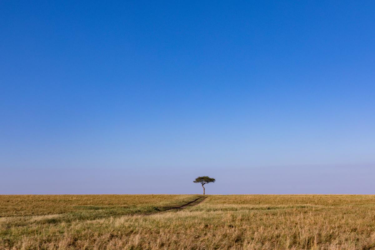 Maasai Mara National Reserve :: Kenya Safari Destinations Photography