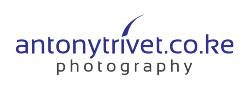 Antony Trivet Photography